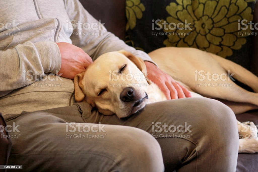 Dog is resting for man owner petting his pet, closeup. Yellow...
