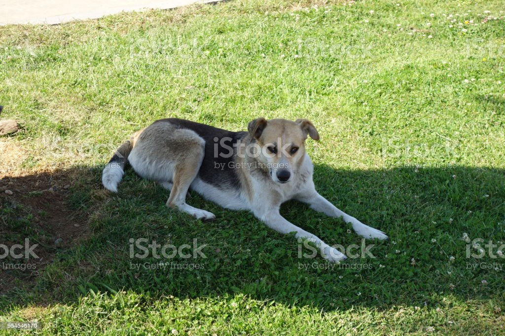 A dog is resting on the grass near a palm tree, Georgia stock photo