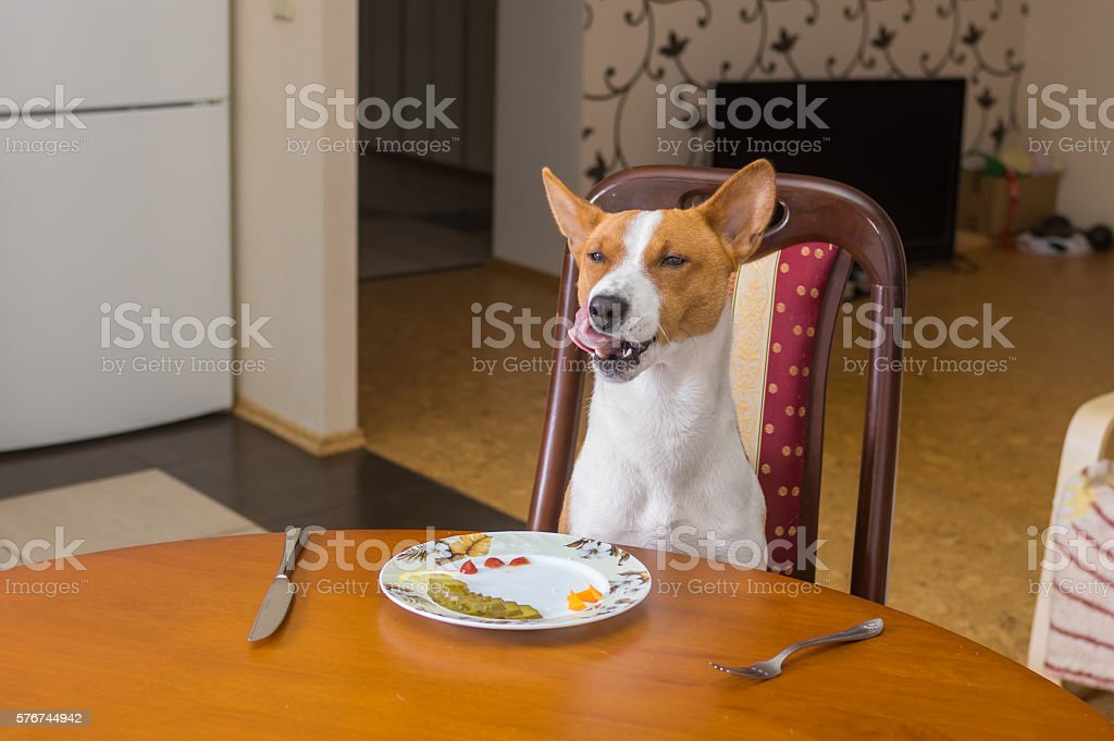 Dog is satisfied with the service in own restaurant stock photo