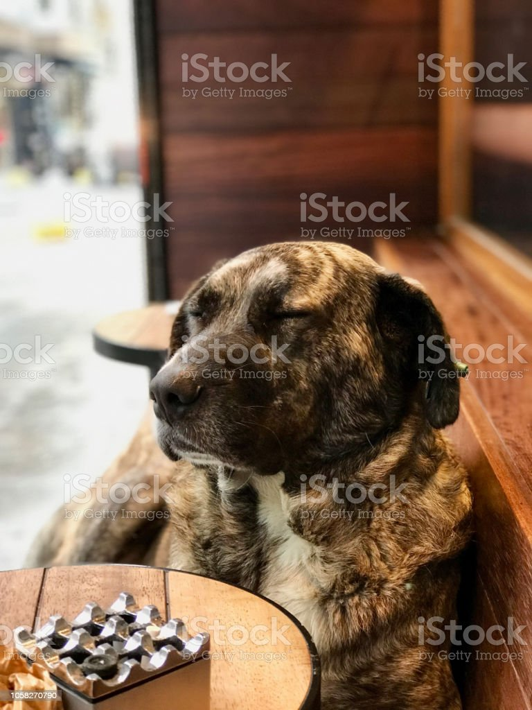 Dog is Sleeping at Pet Friendly Cafe / Coffee Shop. Street Animal.