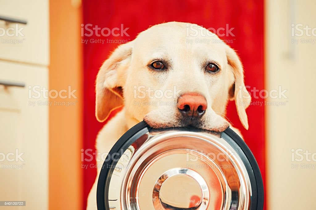 Dog is waiting for feeding stock photo