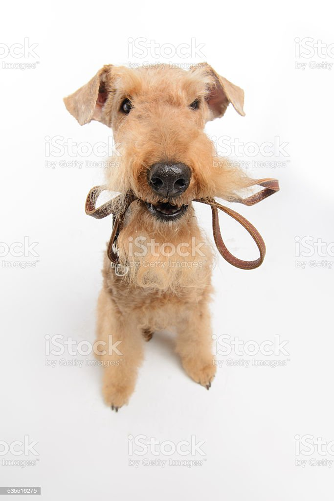 Dog is your best friend stock photo