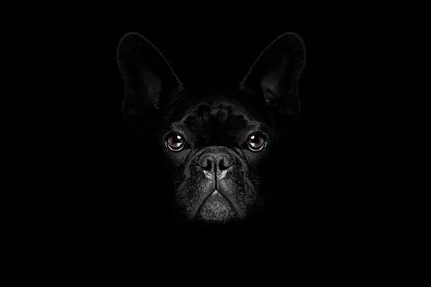 Dog isolated on black picture id603191108?b=1&k=6&m=603191108&s=612x612&w=0&h=o8rczo7oo0lml4lhcuj5zg6vhsboczzfzogj7q4saza=
