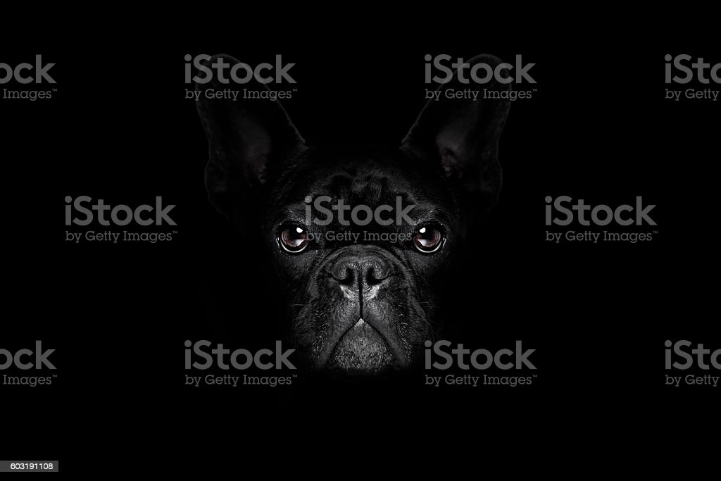 dog isolated on black stock photo