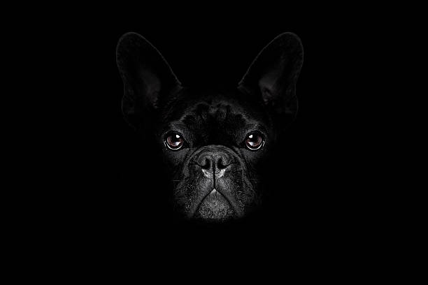 dog isolated on black - high contrast stock pictures, royalty-free photos & images