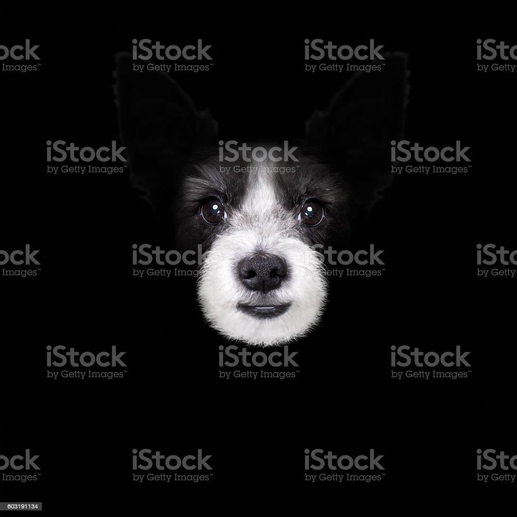 dog isolated on black stock photo