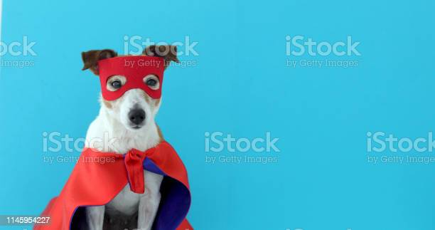 Dog jack russell super hero costume picture id1145954227?b=1&k=6&m=1145954227&s=612x612&h=c3me6b6zs6hempqscf9cdcvsmyw73aivpf9l6drzt3y=