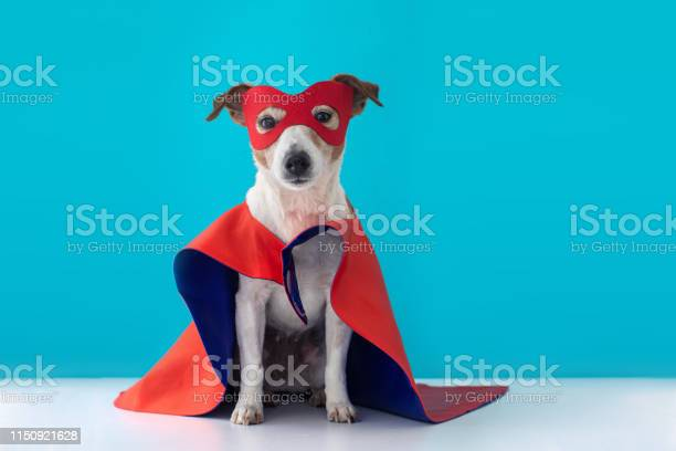 Dog jack russell super hero costume picture id1150921628?b=1&k=6&m=1150921628&s=612x612&h=z1nuopj97t70vbgvucz8tufgvlbf89 6ycp47tz1vxm=