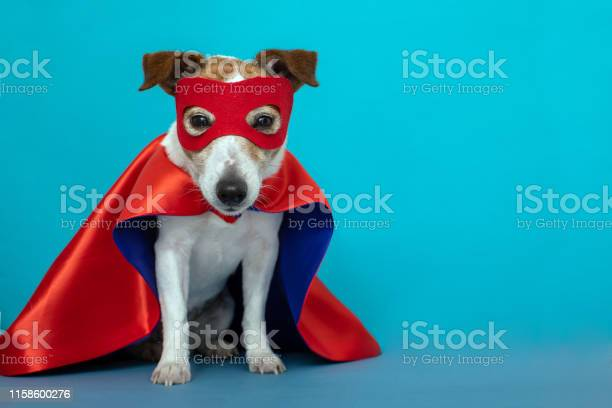 Dog jack russell super hero costume picture id1158600276?b=1&k=6&m=1158600276&s=612x612&h=zqkoxby1lyt 5pulng9r7utwuiynnjmkpashvvbo 50=
