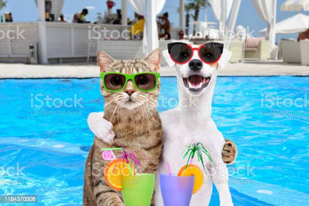 Dog jack russell terrier and cat in sunglasses hugging each other picture id1154370308?b=1&k=6&m=1154370308&s=612x612&h=idj5o4600jkswgdasi9bpmst2gtxqtojo2s7sg gmj8=