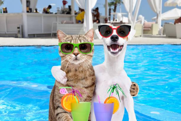 Dog jack russell terrier and cat in sunglasses hugging each other picture id1154370308?b=1&k=6&m=1154370308&s=612x612&w=0&h=l8ue4ldrw2l92htolzgqv32kaj4vgtum s5zmvbk6hi=