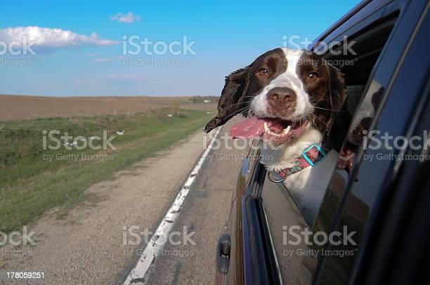 Dog joy ride picture id178059251?b=1&k=6&m=178059251&s=612x612&h=6pgh3i3z56wl9b2zqdkpmeuo6ewenckcakospnmwrau=
