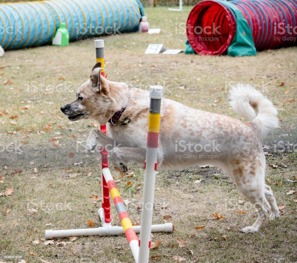 dog jump stock photo