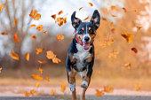 istock Dog jumping in autumn 1280392364