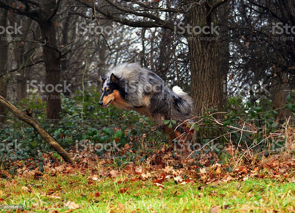 Dog jumping over fence stock photo