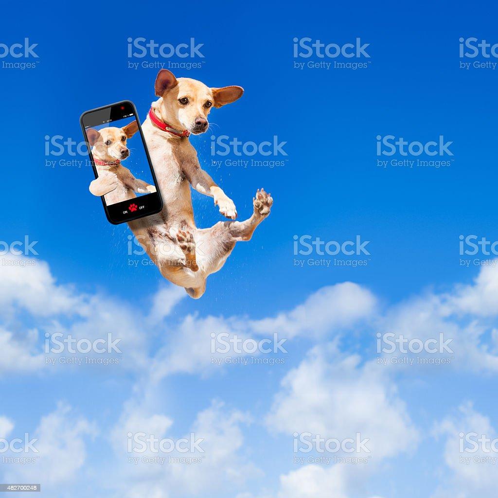 Chien sauter - Photo