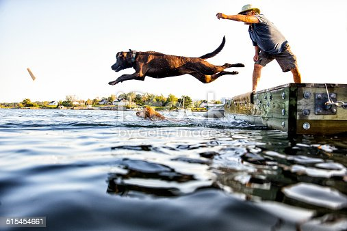 A pet owner throws a stick in the lake & his dog jumps in.
