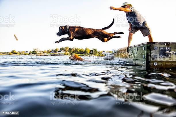 Dog jumping picture id515454661?b=1&k=6&m=515454661&s=612x612&h=z7ahv9couizajh9gk oaao2oluc2zsjs2coyz32zezg=