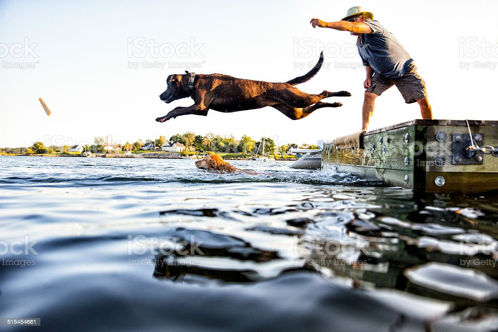 Dog Jumping stock photo
