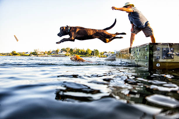 dog jumping - dog jumping stock photos and pictures