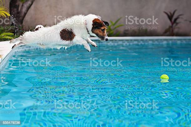 Dog jumping to retrieve a ball in swimming pool picture id535479236?b=1&k=6&m=535479236&s=612x612&h=hc9hou42y7tktniklyr1z6eo91irdfng1ago4fcrgxe=