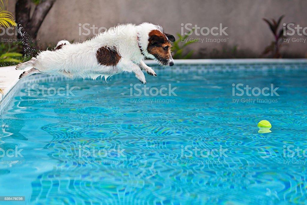 Chien sauter pour récupérer un ballon dans la piscine - Photo
