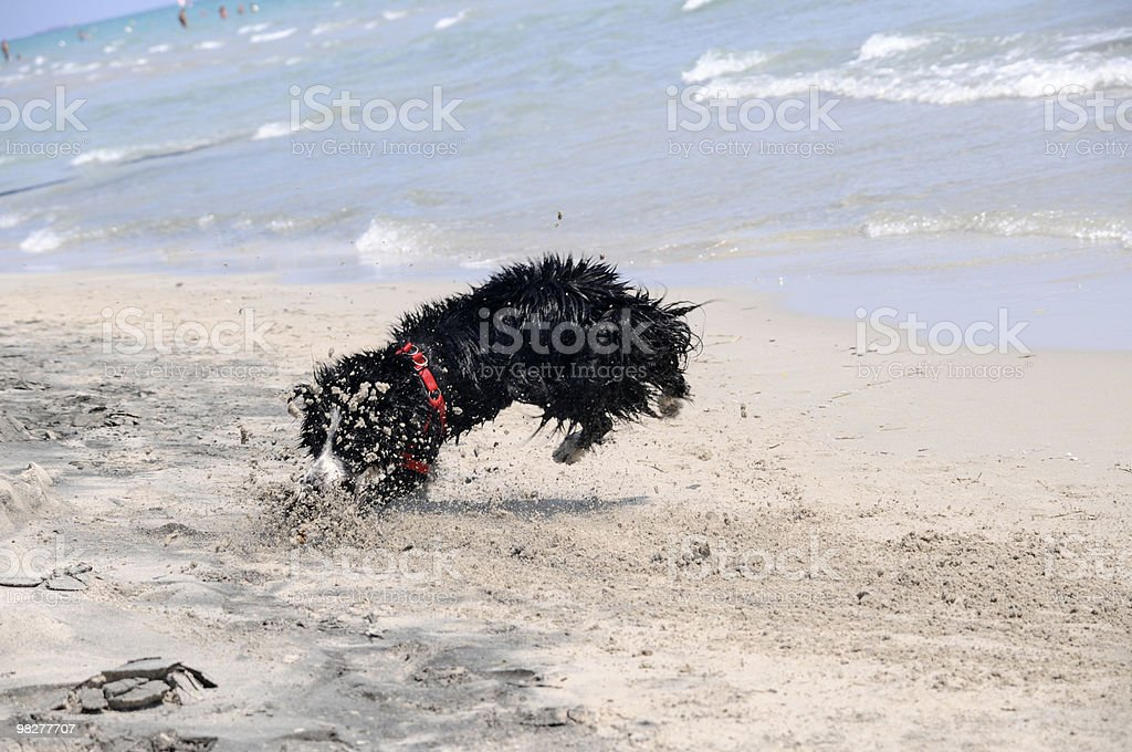 dog jumps for a wooden piece  (series) royalty-free stock photo