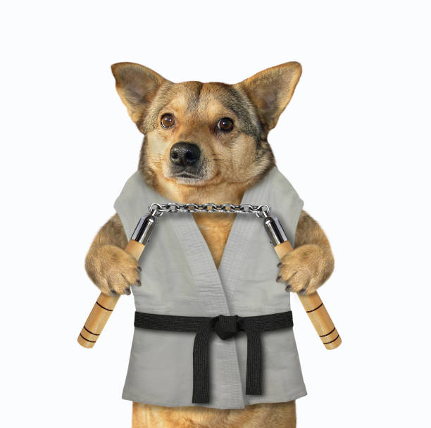 Dog karate fighter with nunchuck 2 stock photo