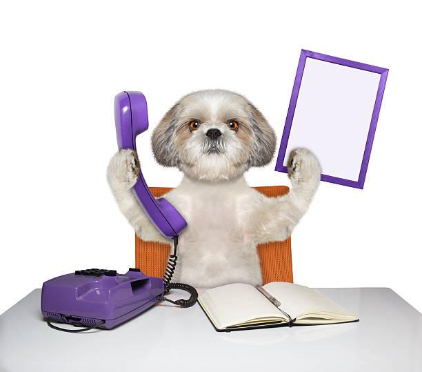Dog keeps phone and frame picture id544101908?b=1&k=6&m=544101908&s=612x612&w=0&h=ihbb1yr4vbnenk i1oyxpppugdb6jebkpv3ewgmqdbk=