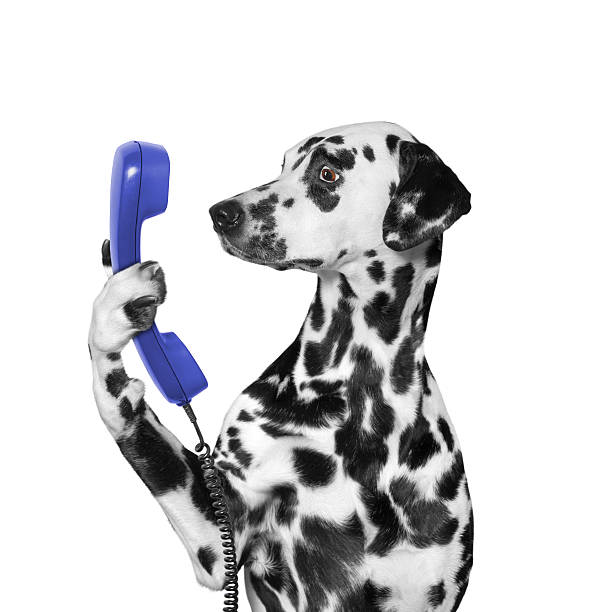 dog keeps phone in its paw stock photo