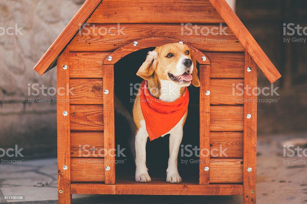 Dog Kennel stock photo