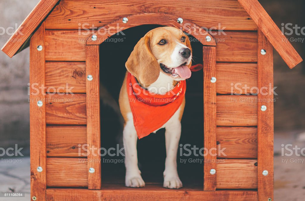 Hund, Hundehütte – Foto