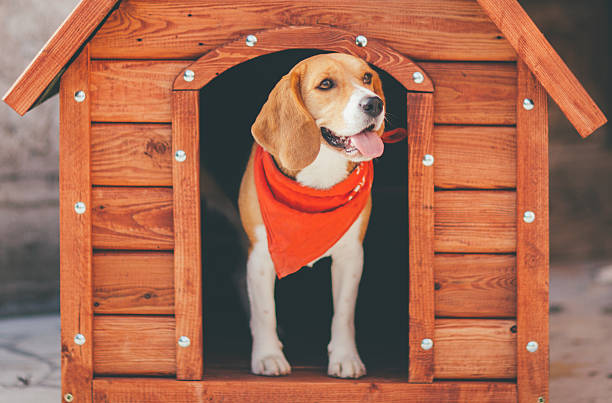 Dog Kennel stock photo