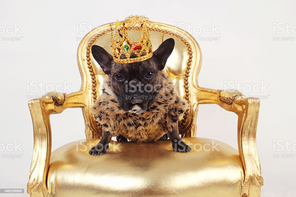 Dog king stock photo