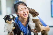 An Asian veterinarian is indoors in a vet clinic. She is wearing medical clothing. She is laughing while holding two dogs, and one is licking her face.