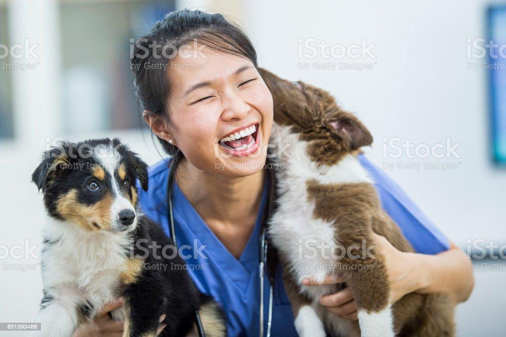 Perro besos - foto de stock