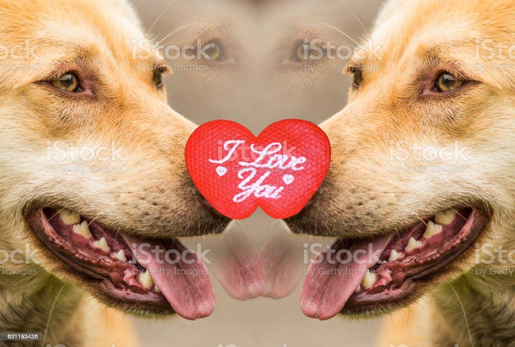Dog kissing, dog love, dog hug, dog tongue out, dog face close up, dog couple, dog portrait, dog teeth, and excited dogs stock photo