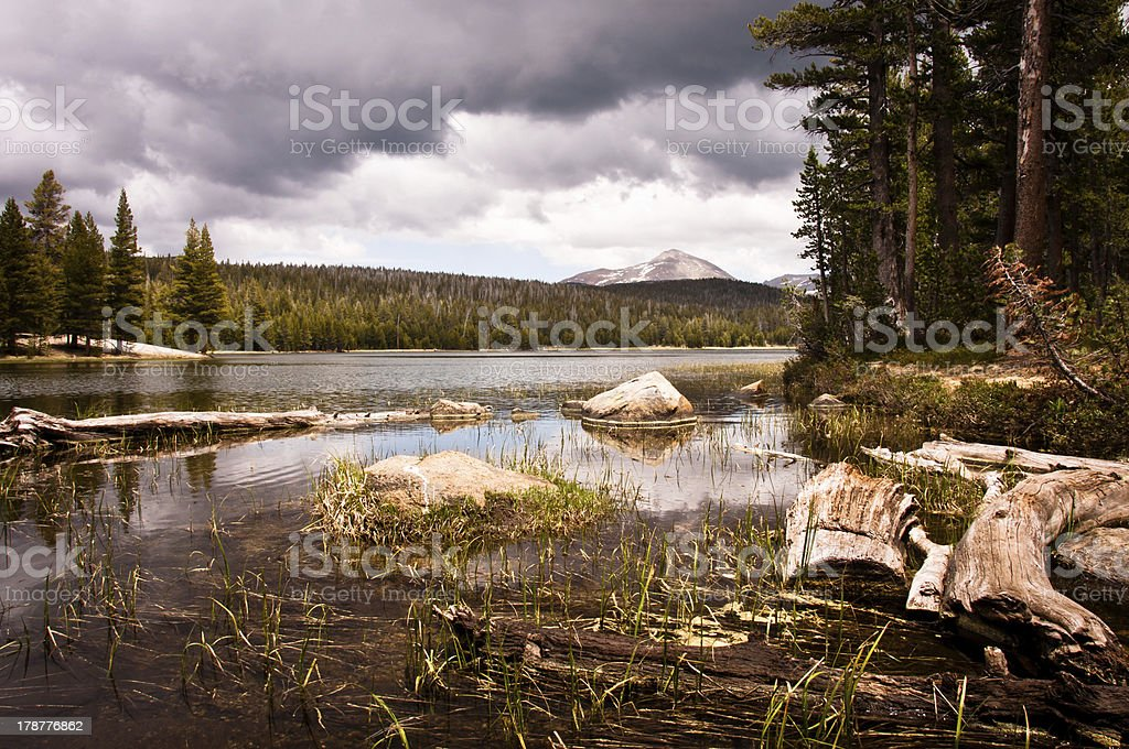 Dog lake royalty-free stock photo