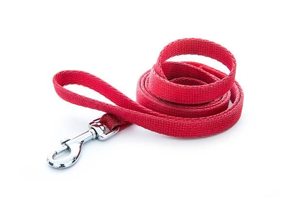 dog leash red dog leash isolated on white background collar stock pictures, royalty-free photos & images