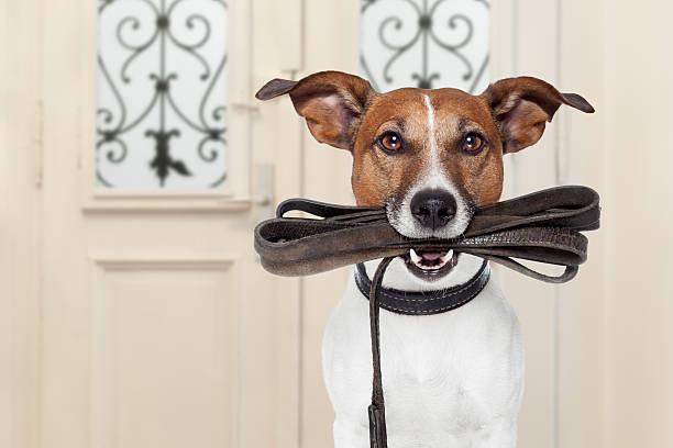Dog leash walk picture id517134868?b=1&k=6&m=517134868&s=612x612&w=0&h=uz h5a026drpc3kv7a6jazc7mfsfmavxkpkfcob14ac=