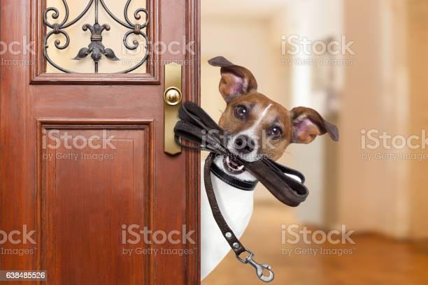 Dog leash walk picture id638485526?b=1&k=6&m=638485526&s=612x612&h=fiqmmzyks6xvzmwp7wqaqcxsfwr2tuiqhsrbhbtuljm=