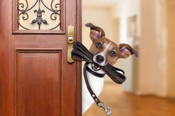 Dog leash walk picture id638485526?b=1&k=6&m=638485526&s=612x612&w=0&h=htbvuqodl0fuzzkzuxwrs9oktxfefv0zuphr9vpn1eg=