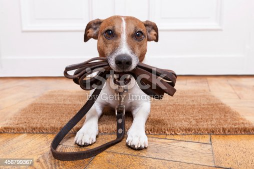 istock dog leather leash 456799367