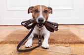 istock dog leather leash 456799367