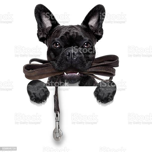Dog leather leash picture id538856235?b=1&k=6&m=538856235&s=612x612&h=l2d3i0qixqiotmijxvzvemx9ruzejl6we6lf2oztqfk=