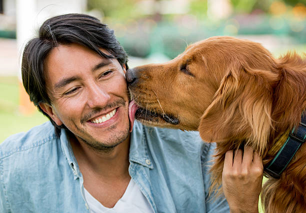 Dog licking a happy man stock photo