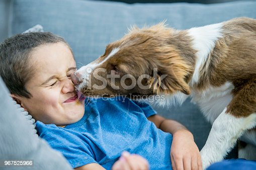 A boy is having his face licked by his border collie dog. They are laying on the couch together.
