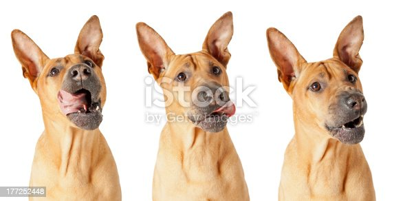 Dog licking his lips - three photos isolated over white