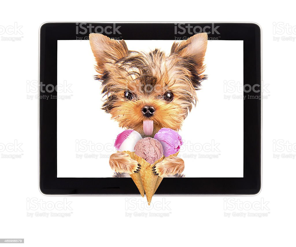 dog licking with ice cream on tablet screen stock photo