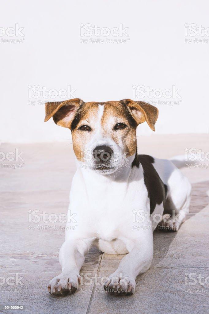 Dog lies on the balcony and enjoying the sun stock photo